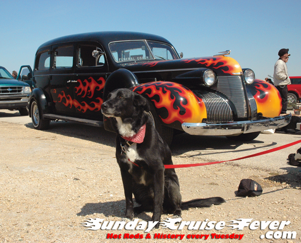 hot rodding dog